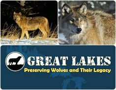 Michigan Wolves