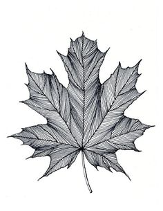 Maple Leaf Print of original Black or Green Pen and Ink DrawingYou can find ink drawings and more on our website.Maple Leaf Print of original Black or Green Pen and . Pencil Art Drawings, Art Drawings Sketches, Drawing Designs, Lettering Brush, Beauty Illustration, Mandala Art, Leaf Prints, Doodle Art, Black Pen Drawing