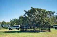 Anthony Hordern tree Camden NSW