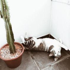 Max sendo Max 😻❤️ #mandacaru #gatos