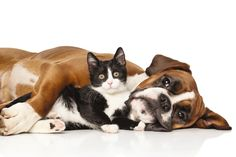 Introducing a cat to a dog in your home? It should be done carefully. Our friends at PetMD have some pointers.