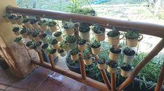 Succulents metal cups