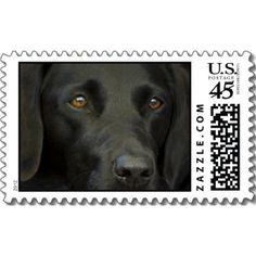 Black Labrador Dog #Postage #Stamps