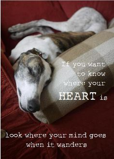 greyhound postcard: where your heart is, $3.29 by thedoghouse