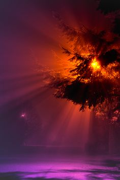 Rays in the Fog by Joshua-Cramer