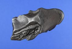 Simply put, one of the best oriented iron meteorites ever!   www.aerolite.org