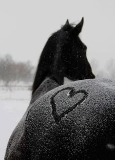 Heart on horses butt in the snow, horse photography Funny Horses, Cute Horses, Pretty Horses, Horse Love, Beautiful Horses, Animals Beautiful, Horses In Snow, Beautiful Images, Horse Riding Quotes