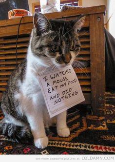 Best of cat shaming