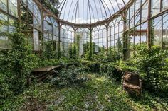 The greenhouse of an abandoned castle in the north of Belgium