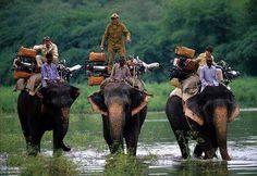 Amber Fort Rajasthan Royal Enfield Bullet 650 cc bikes on elephants . Photographed by Thomas Goisque Elephant India, Royal Enfield India, Royal Enfield Bullet, Camel, Safari, Wildlife, Bike, Adventure, Elephants