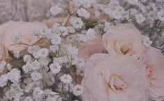 Flowers floral baby's breath roses photography