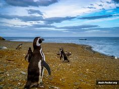 Isla Magdalena, Punta Arenas