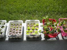 Echoes of Laughter: 11 Seedling Ideas for Spring