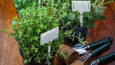 Πώς να φτιάξετε αρωματικά χώρου με αρωματικά φυτά