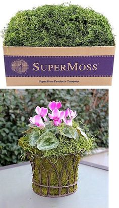 Swags and Garlands 28130: Supermoss (26927) Spanish Moss Preserved Grass 3Lbs Grass Green -> BUY IT NOW ONLY: $48.86 on eBay!