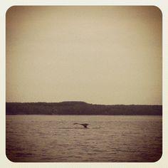 #Baleine