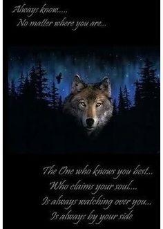 White Wolf, my spirit animal :) Native American Wolf, Native American Quotes, American Women, American Indians, American Art, American History, Animal Spirit Guides, My Spirit Animal, Lone Wolf Quotes