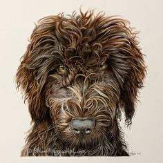 Possibly the curliest coloured pencil portrait I've drawn – Sydney the Australian Labradoodle (they have a slightly different appearance to other Labradoodles). She's pictured here at just seven months old, and when fully grown will be taller than a Labrador. She lives in Oslo, Norway, with a landscape gardener and loves to go to work – rolling in the soil and swimming.