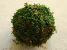 Making Your First Kokedama Moss Balls  | My Green Space