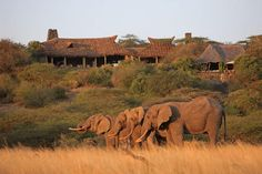 Private Safari Kenya, Ol Donyo Lodge Eco-lodge - Micato Safaris