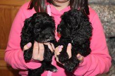 black babies Black Babies, Puppies, Cute, Cubs, Kawaii, Pup, Black Baby Boys, Newborn Puppies, Puppys