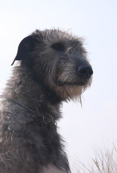 Photo by Elias the Wolfhound