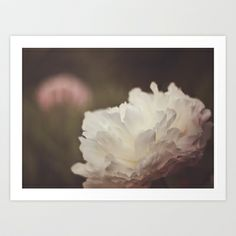 White and Pink Peonies Art Print
