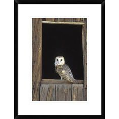 Global Gallery Barn Owl Perching on Barn Window, North America by Konrad Wothe Framed Photographic Print Size: