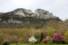 https://flic.kr/p/t6cL7s | Seneca Rocks in bloom
