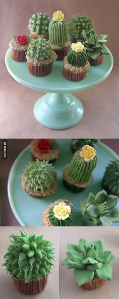 Those are some succulent cupcakes... Amazing Cupcakes, Cool Cupcakes, Cupcakes Decoration Awesome, Cupcake Decorations, Taco Cupcakes, Funny Cupcakes, Funny Cake, Cupcake Puns, Cool Cupcake Recipes