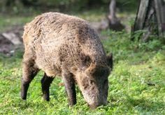 Wildpark bei München: Forstenrieder Park #BaySF #Staatsforsten #Erholung #Ausflug #Sehenswürdigkeiten #Spazieren #Wandern #Bayern