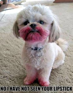 My Bichon, Precious, once tried this. She also gave our off white carpeting polka dots. Gotta love them...