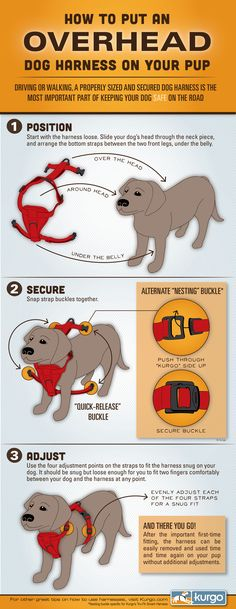 How to put on an overhead dog harness (infographic)