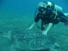 Ik met een reuzenschildpad, Egypte