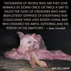 reason to be #vegan ... animals deprived of everything that could make their lives worth living and who endured the awful suffering and the terror of the abattoirs ~ courtesy Jane Goodall