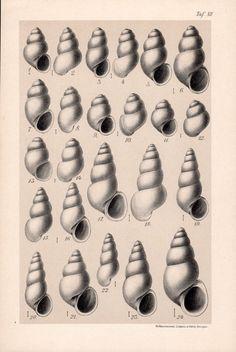 1909 Snails Print Aquatic Gastropod Molluscs Snail by Craftissimo