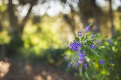 Fine Art Photography, Landscape PhotographyOctober 1, 2015 Walk in The Light | Purple By Kim Peterson