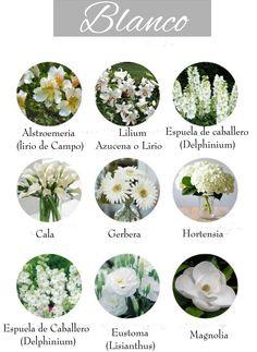 Flores blancas. White flowers.