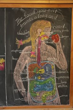 Waldorf ~ 7th grade ~ Human Physiology ~ Digestive System ~ chalkboard drawing