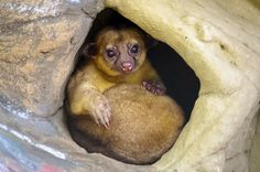 El Refugio Foundation is a Cali-based non-profit organisation providing shelter for 120 wildlife animals saved from illegal trade Thing 1, Happy Sunday, Shelter, Wildlife, Fox, Instagram Posts, Animals, Natural Jewelry, Shelters