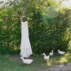 this wedding dress came with an entourage of ducks, Kumeu New Zealand #jelphotography #aucklandphotographer alternative wedding photographer