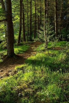 Walk Through The Forest. A Walk Through The ForestA Walk Through The Forest Beautiful Forest, Beautiful World, Beautiful Places, Forest Path, Tree Forest, All Nature, Walk In The Woods, Bushcraft, Nature Pictures