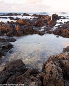 Instead of hitting the sand for a tan, try scuttling along tide pools and experiencing the myriad creatures that live in this in-between zone.