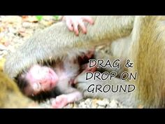 Million hurt & hungry poor life Tanya was dropped & dragged on ground cos Tana reject milk. - YouTube Hello Dear, Cos, It Hurts, Milk, Bedroom, Youtube, Bedrooms, Youtubers, Youtube Movies