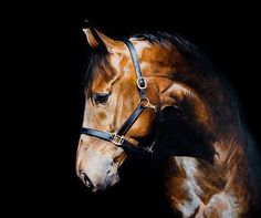 Fine Art Equine Giclée Print by Tony O'Connor. Signed, unmounted print delivered worldwide, rolled in a tube.