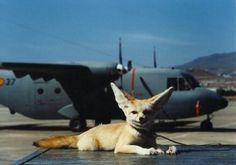 Romelina, mascota viva del 461 Escuadrón