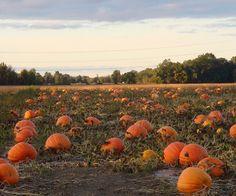 Pumpkin patch love.
