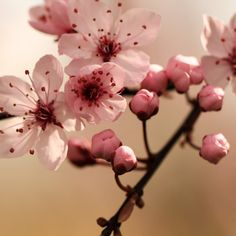 cherry blossom this would be a sweet tat!