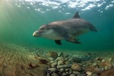 Dusty the Dolphin, Co. Clare, Ireland