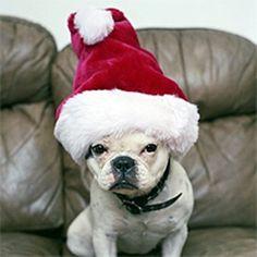 HoHoHo have a jolly ol Christmas